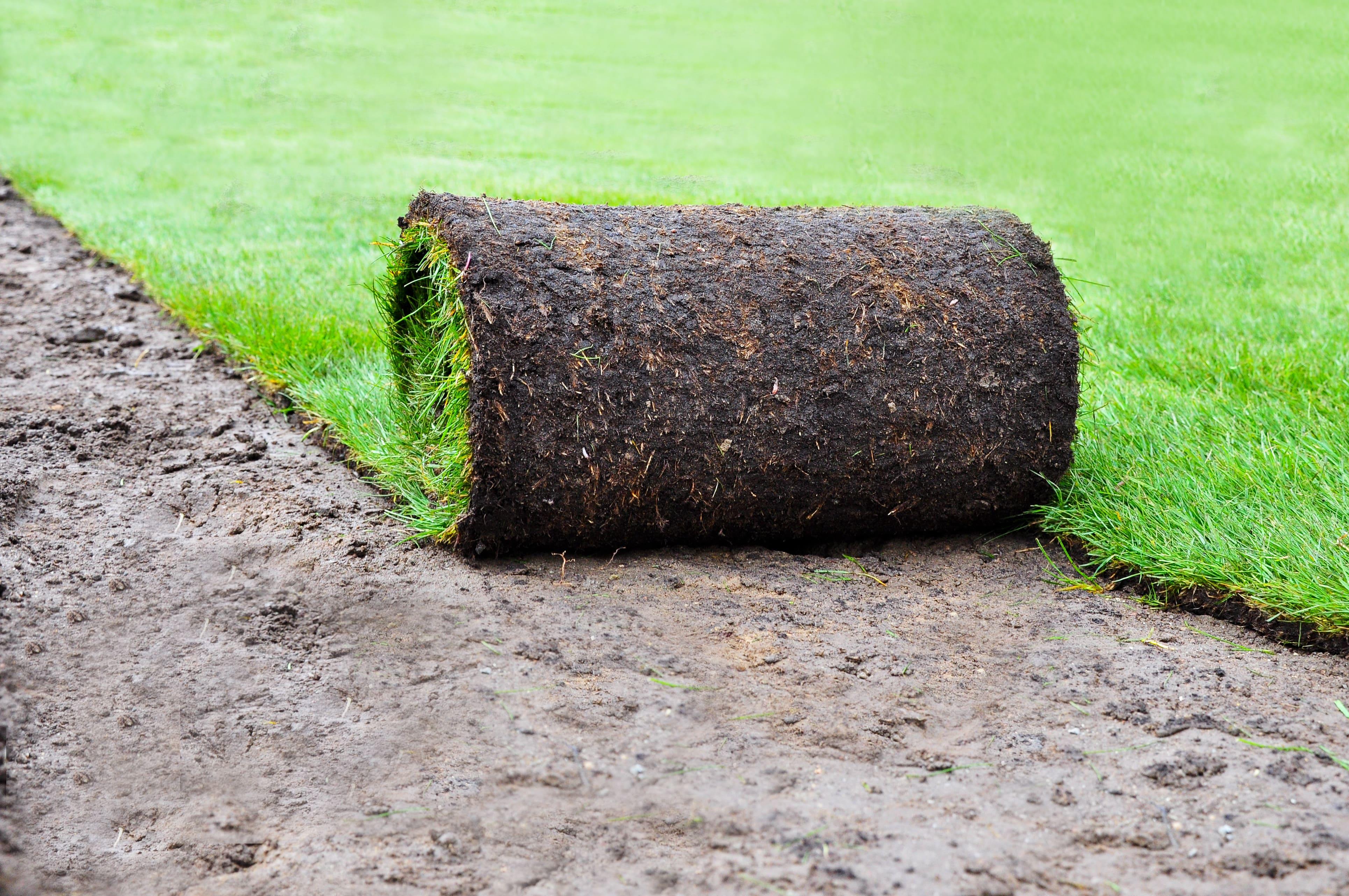 6 Nützliche Tipps Zum Fertigrasen Verlegen Pflegen Kauf Ab 189