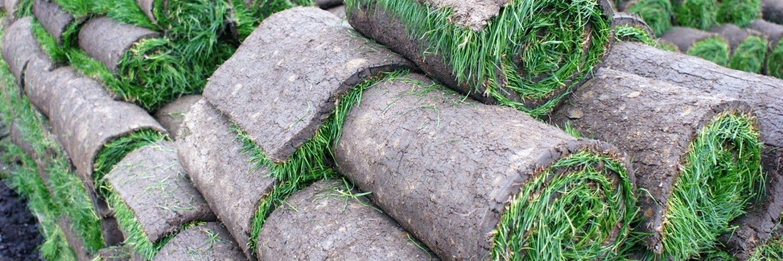 Rollrasen/Fertigrasen günsitg bestellen