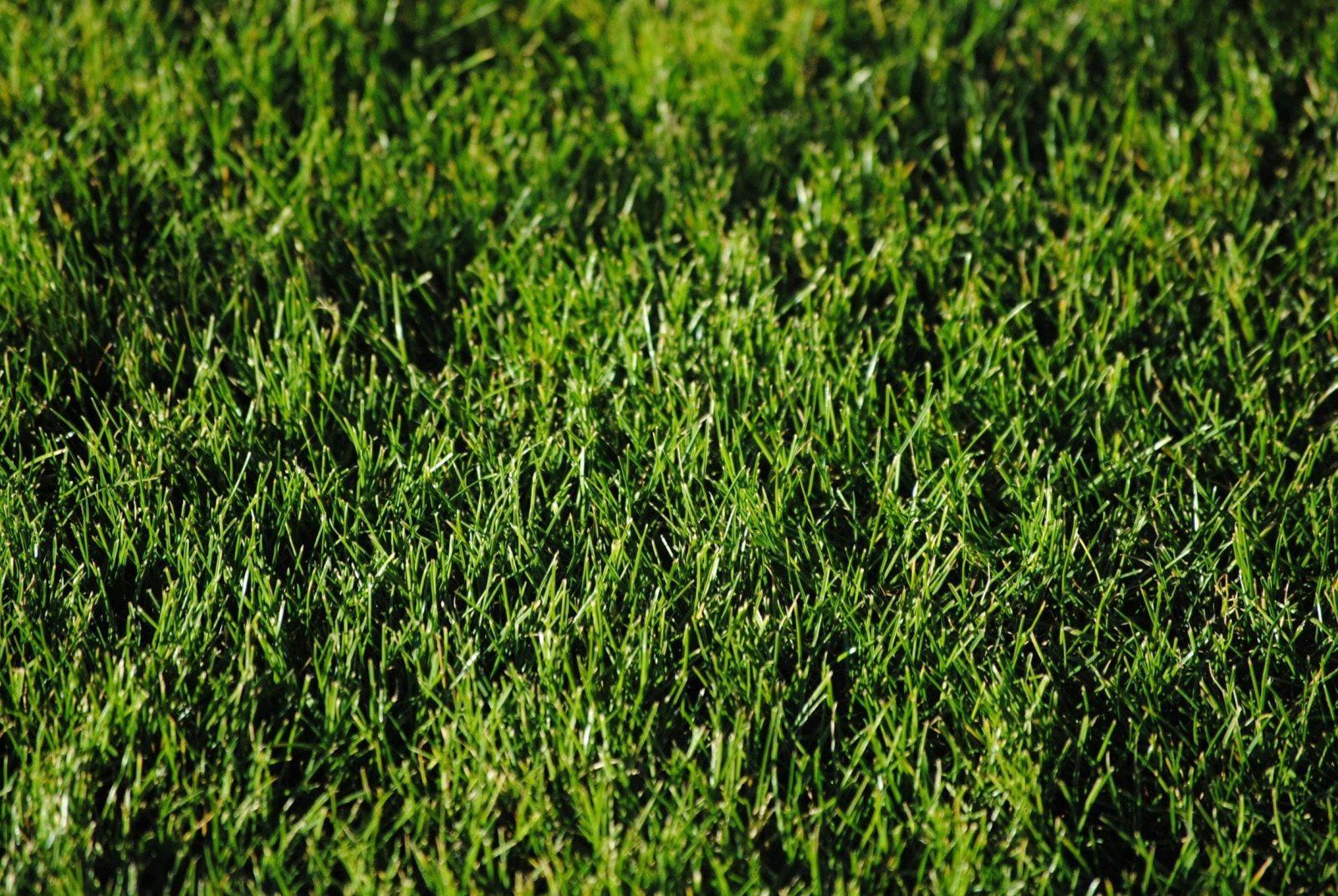 Rollrasen Verlegen 7 Schritte Bis Zum Grasgrünen Garten 6 Extratipps