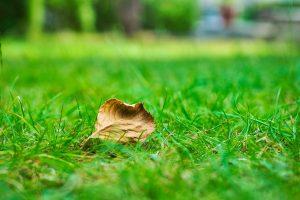 Rollrasen auf alten Rasen verlegen