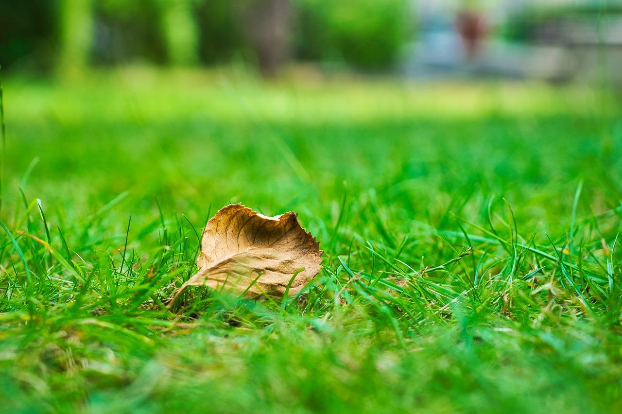 Rollrasen Auf Alten Rasen Verlegen Geht Das Und Wenn Ja Wie