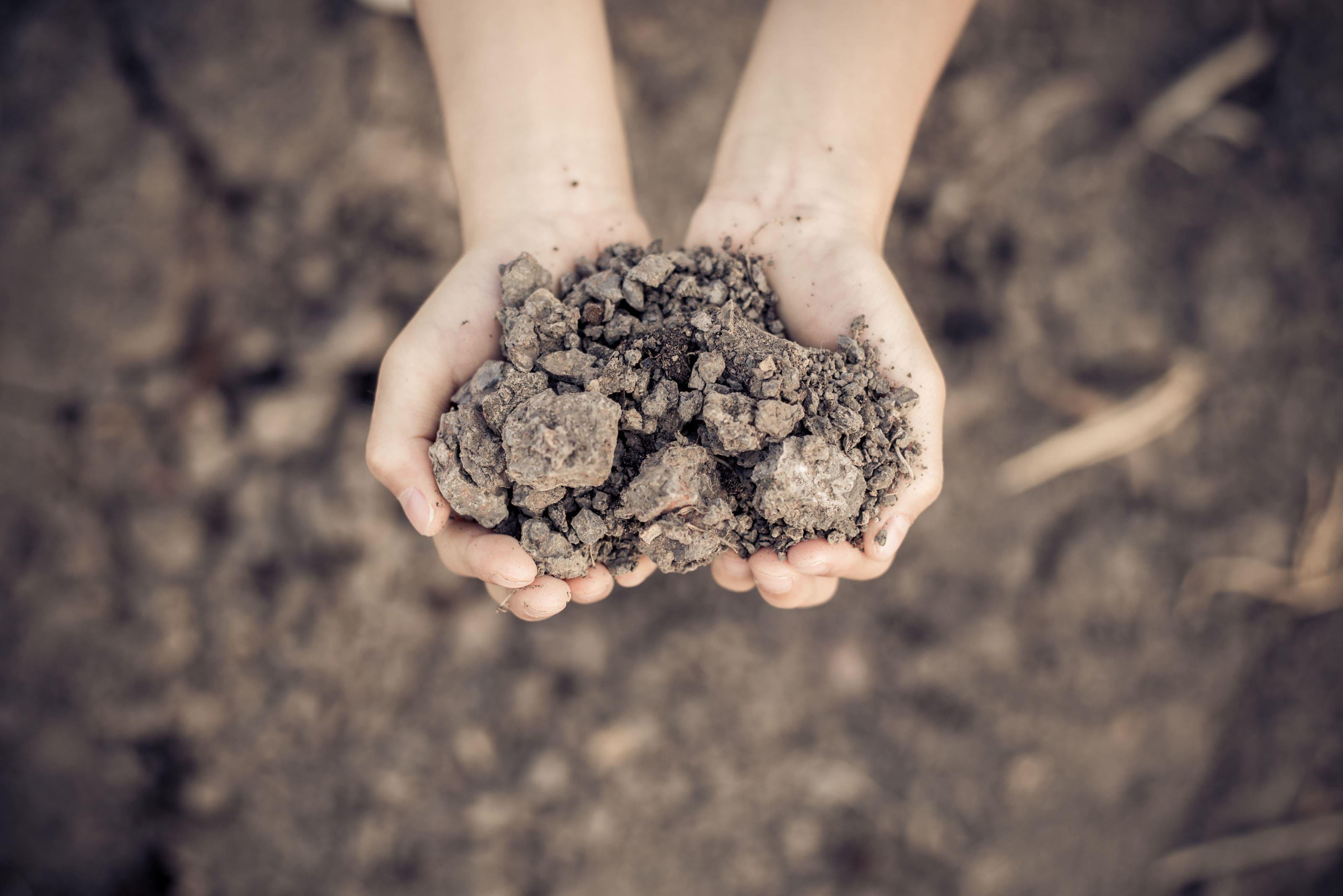 Rasen Starterdünger