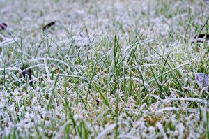 Rasen winterfest machen