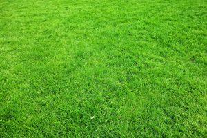 Perfekter Rasen mit Rasendünger Abo