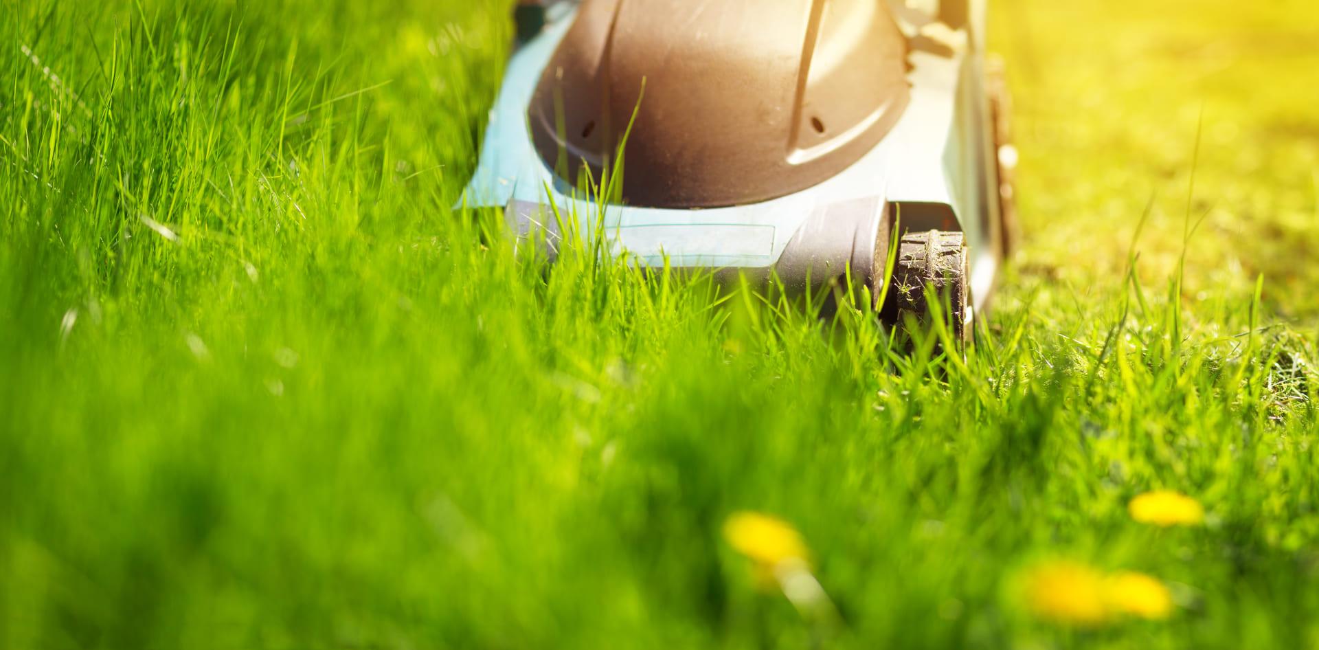 Wurde der Rasen zu früh oder zu kurz gemäht?