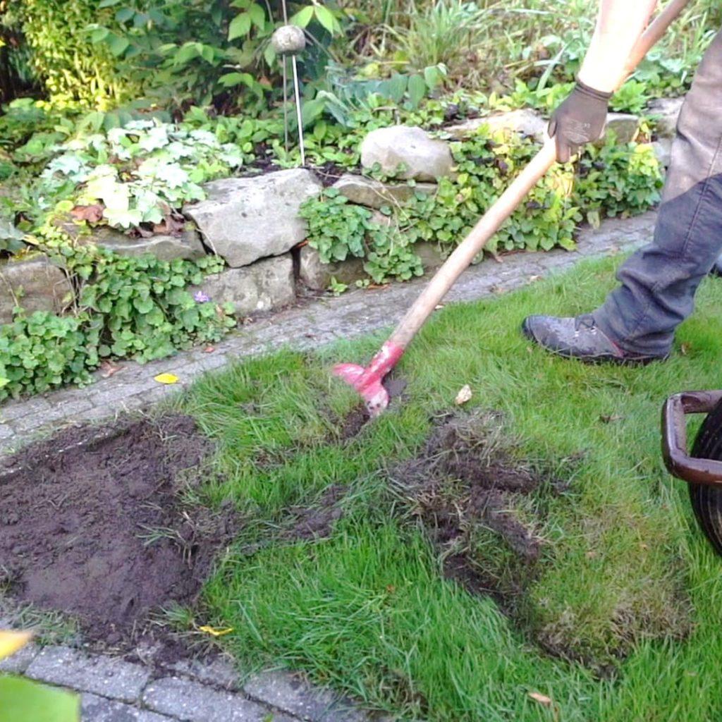 Alte Grasnarbe vor dem Verlegen entfernen