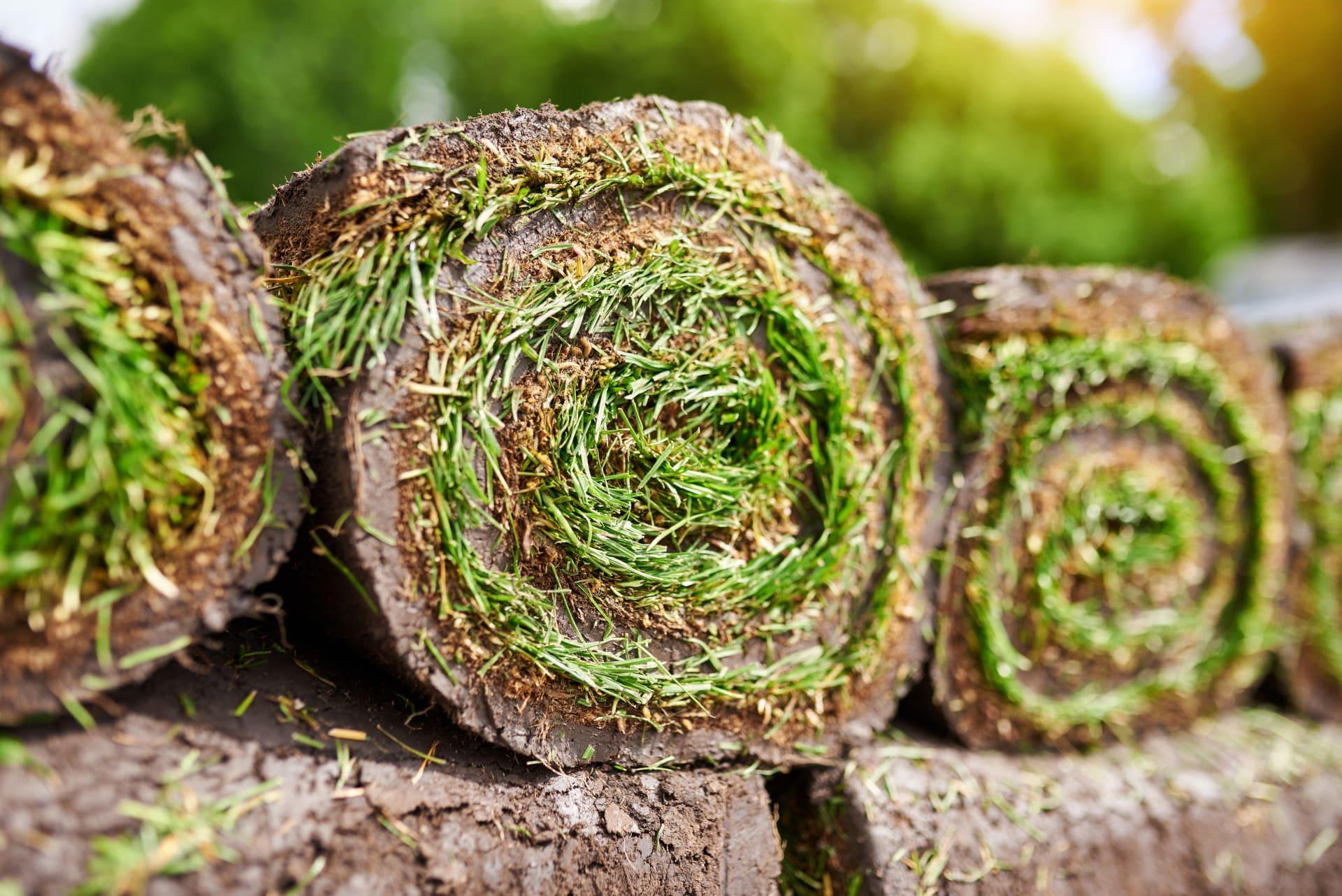 Neue Grasssoden / Rasensoden kaufen