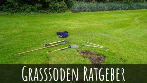 Grassoden / Rasensoden abtragen, entfernen und neu verlegen